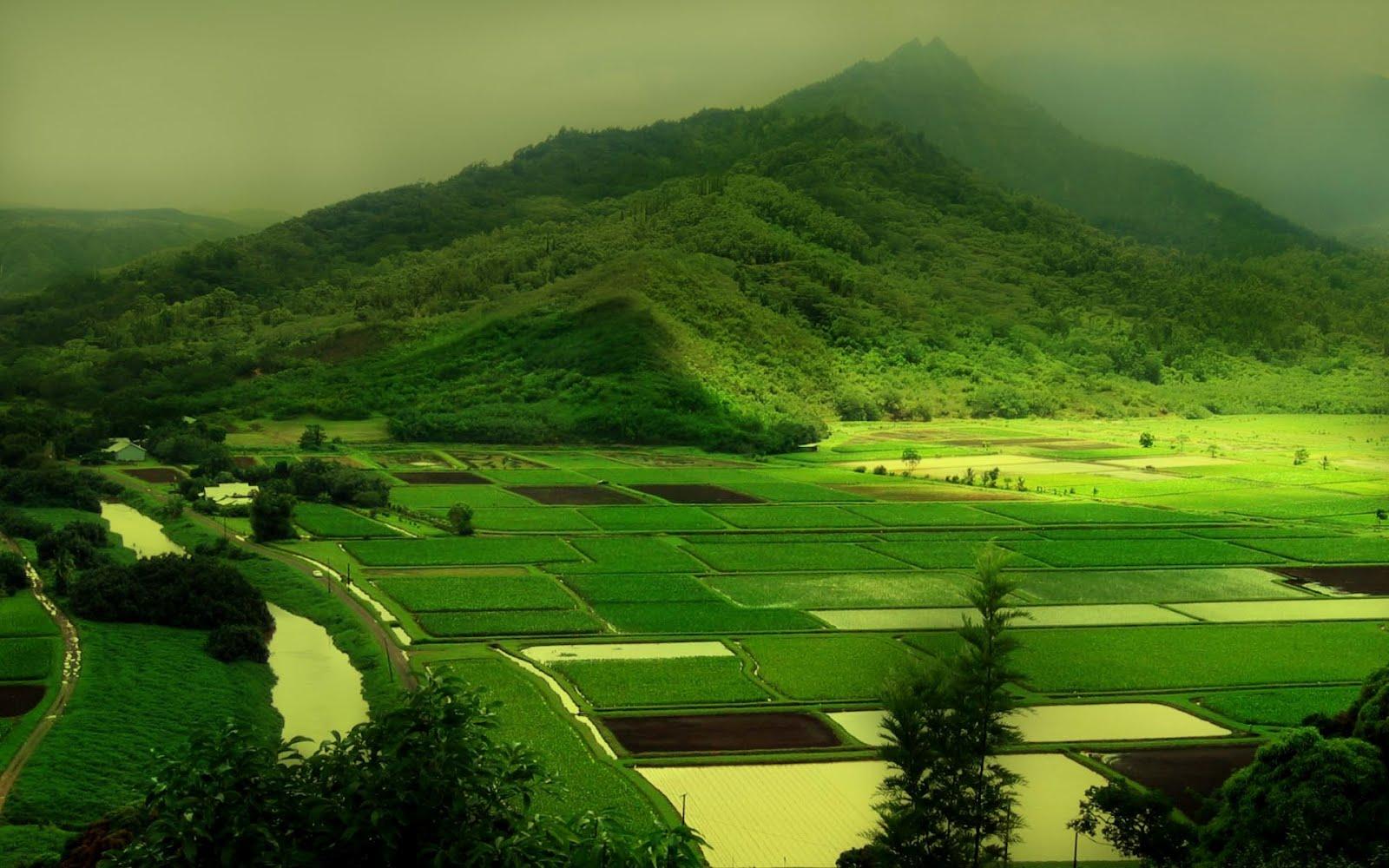 ireland-green-1